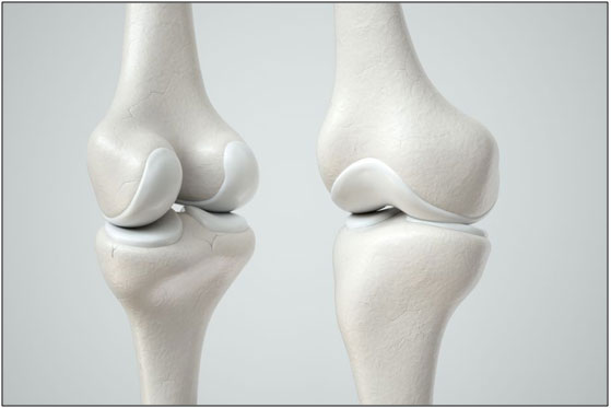 Cartilage present between the joints